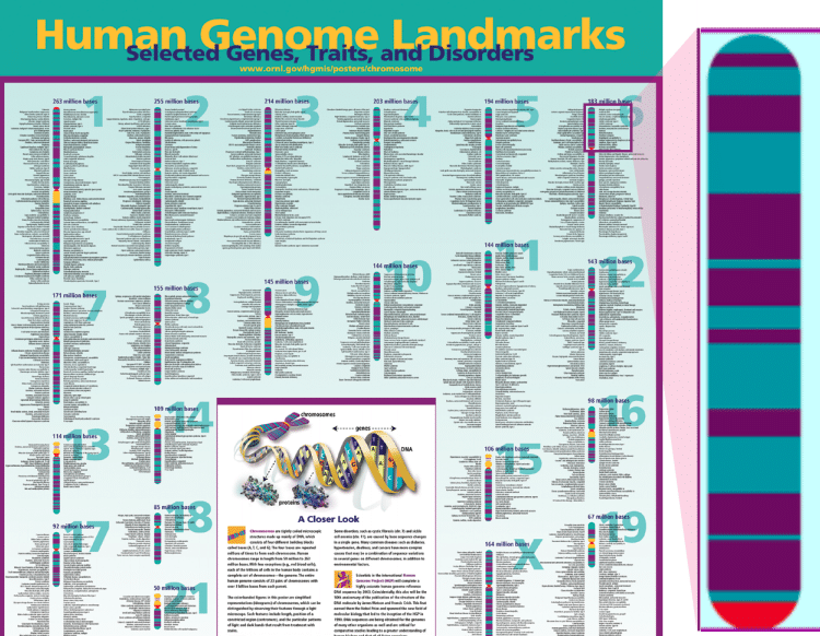 Free Genome Poster