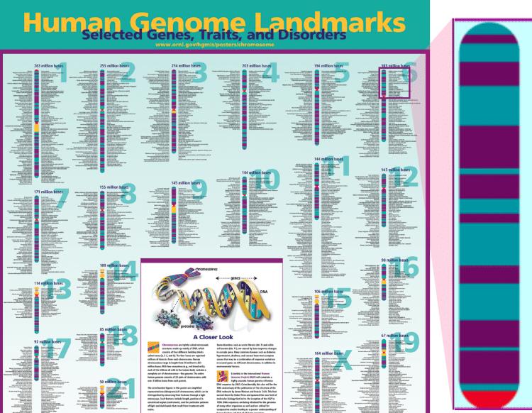 Free Genome Poster