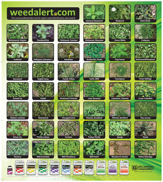 free weed alert poster