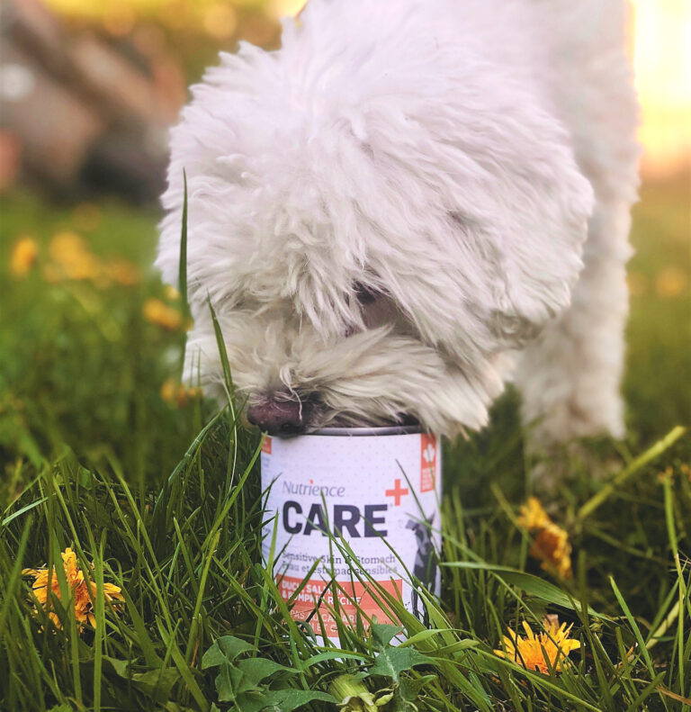 Free Nutrience Care Pet Food